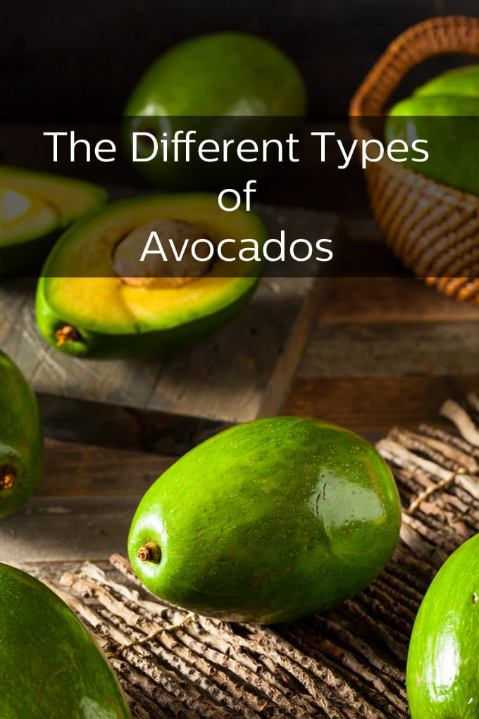 Hass avocados may be the most familiar and popular variety, but there are other kinds as well.