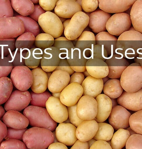 Types of Potatoes and Uses