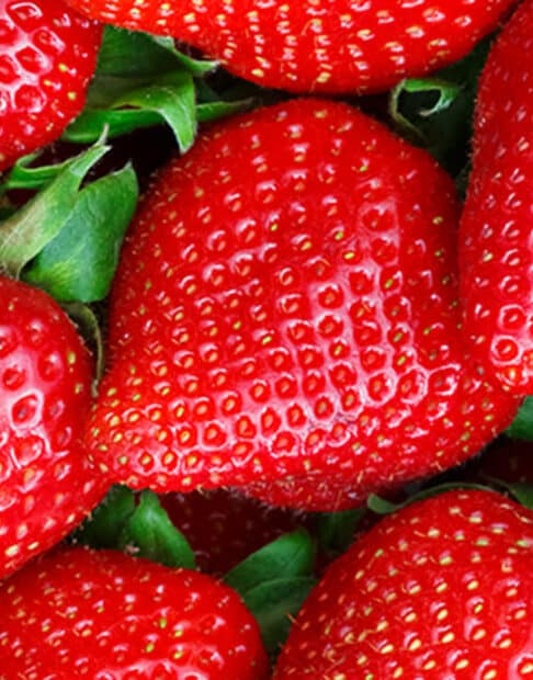 Everything You Ever Wanted to Know About Strawberries