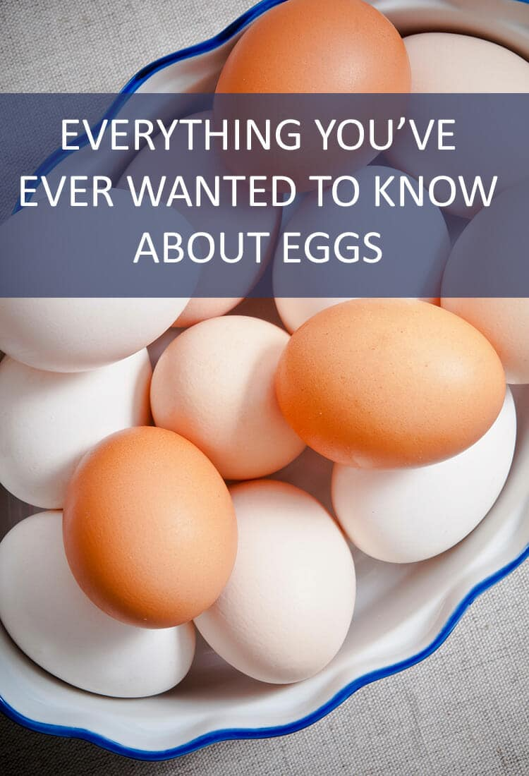 Calling all egg lovers! Here's everything you've ever wanted to know about your favorite protein. Let's get cracking! Boo!
