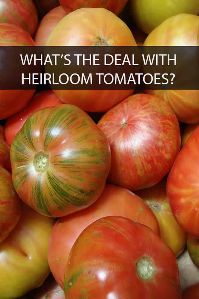 Those funny looking tomatoes are called heirloom tomatoes and they're delicious. Here's why.