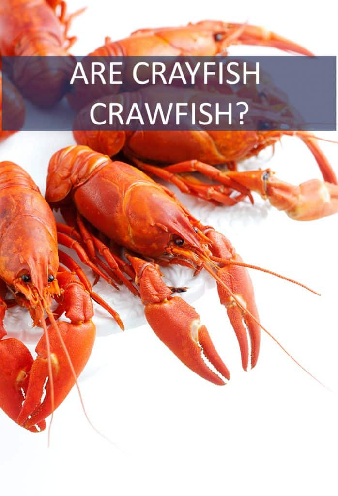 If you're heading down to NOLA, you need to know if there's a difference between crayfish and crawfish.