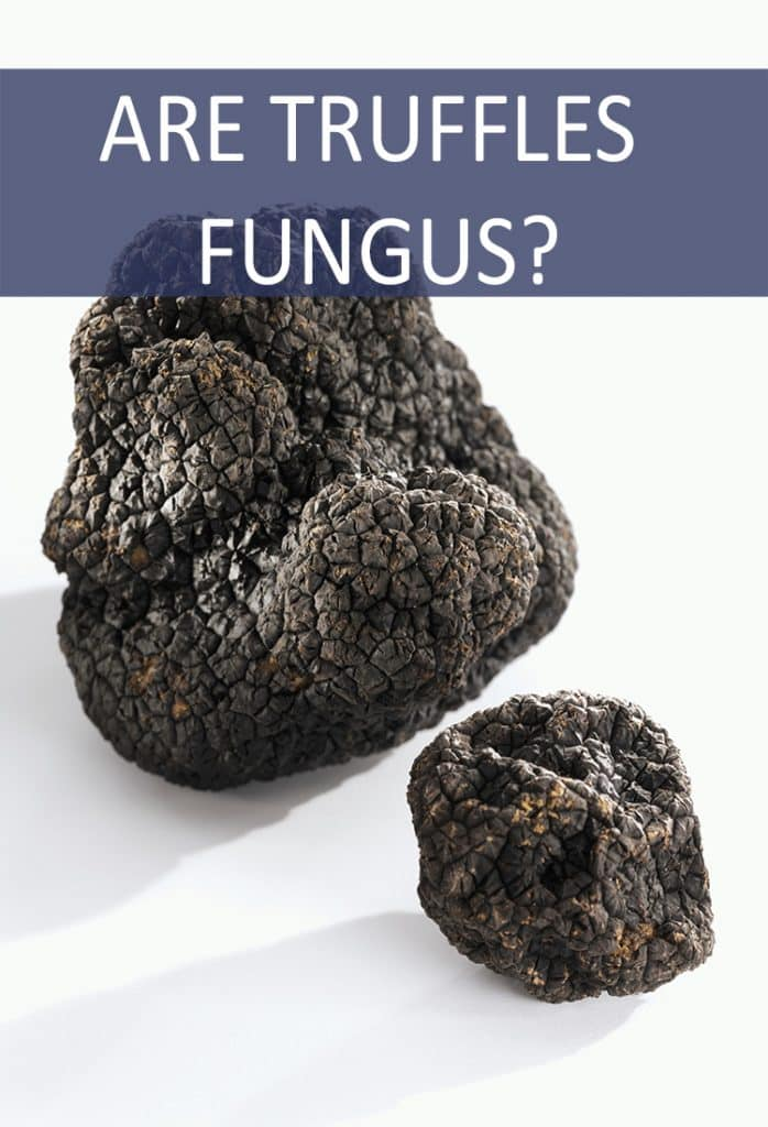 When you bite into an amazing truffle dish at a fancy restaurant are you eating fungus?