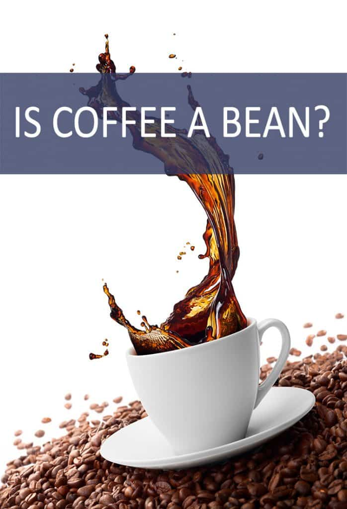 We've all seen coffee beans, but is the name deceptive? Are they actually beans?