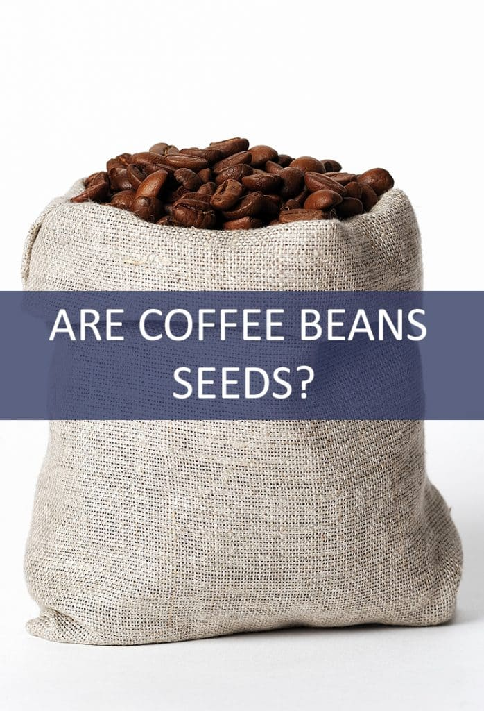 Coffee is typically referred to as a bean in its un-ground state, but is that accurate? Is it really a seed?
