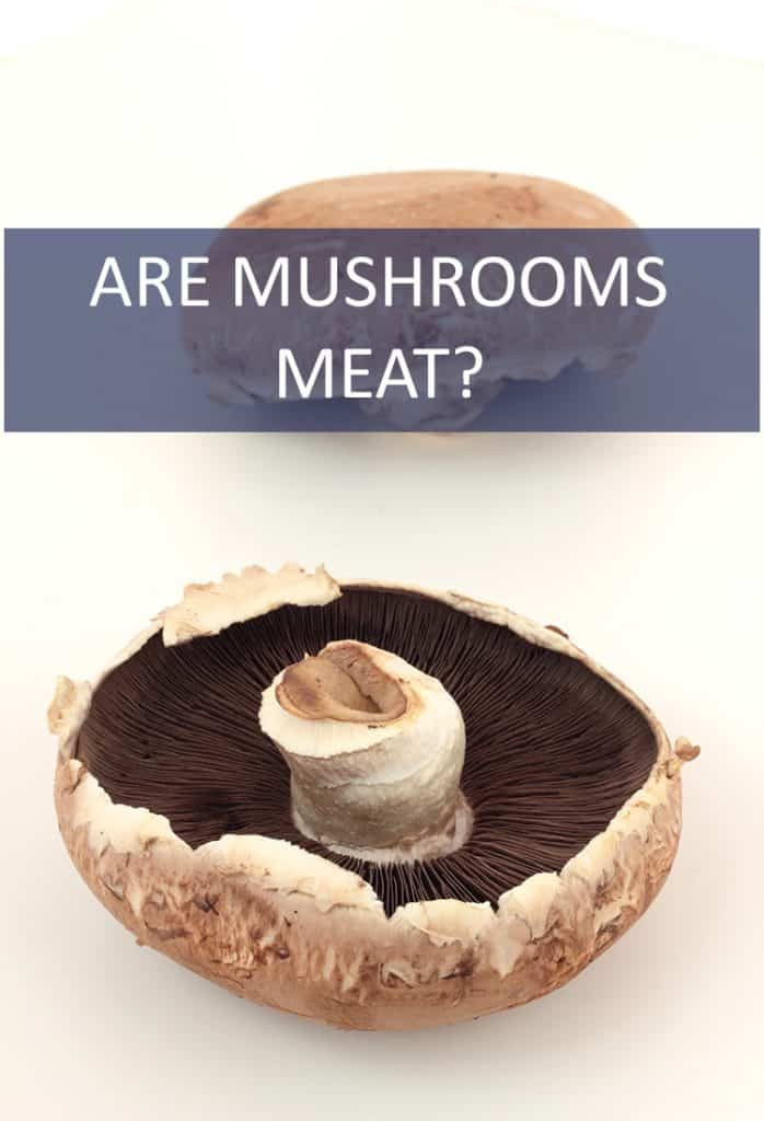 They have a meaty texture and can replace traditional red meat in almost any recipe. So, are mushrooms meat?