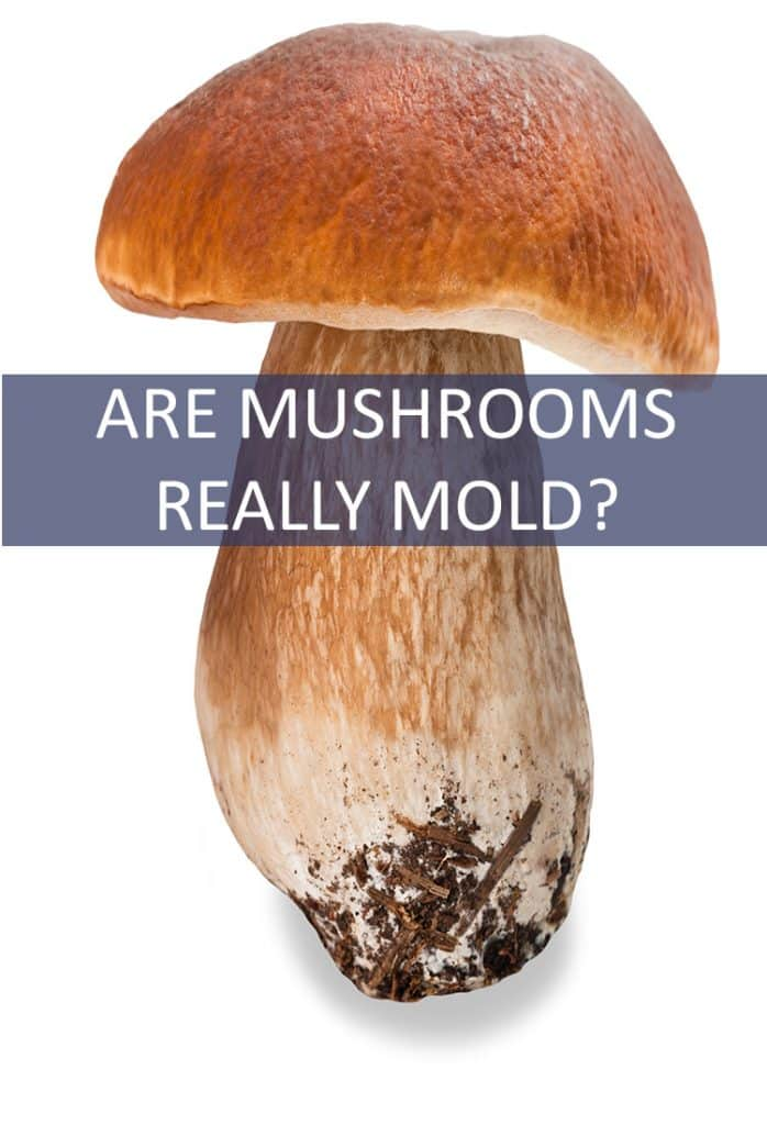 Mushrooms are a welcome addition to many main courses - from steak to salads. But is that actually mold you're eating?