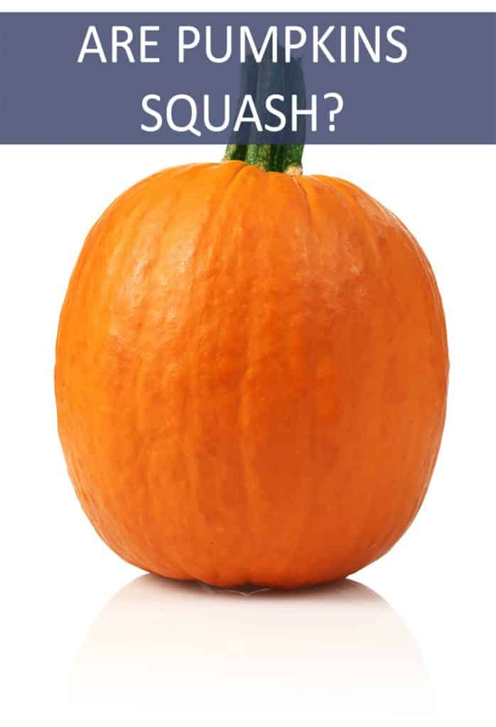 Is a Pumpkin a Squash?
